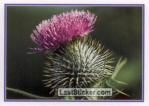 Thistle (Icons and Emblems)