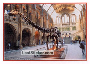 Natural History Museum (Art & Museums)
